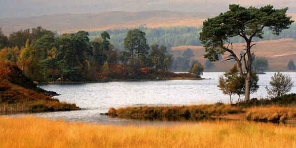 Scotland Art Print featuring the photograph Scots Pine Loch Tulla by John McKinlay