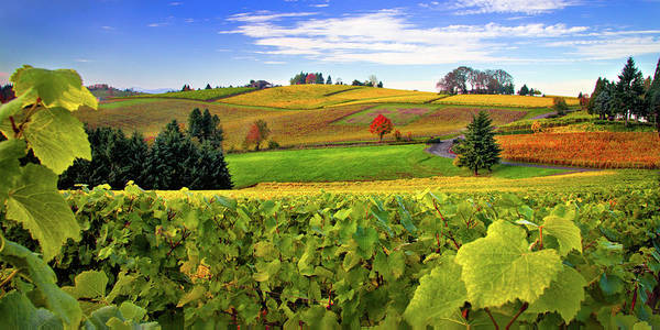 Oregon Art Print featuring the photograph Westward From Domaine Drouhin by Marvin Mast