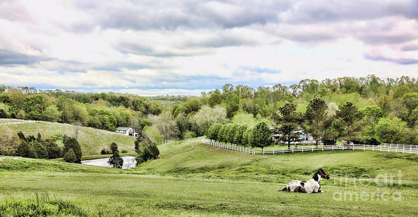 Tennessee Art Print featuring the photograph Meadow II by Chuck Kuhn