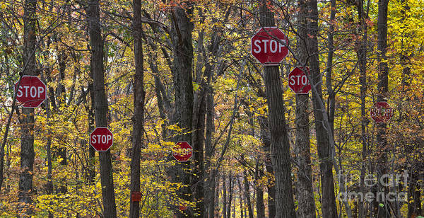 Stop Art Print featuring the photograph Stop A Subtle Suggestion To Keep Out by Jeannette Hunt