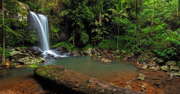 Panorama Art Print featuring the photograph Curtis Falls - Mt Tamborine by Mark Lucey