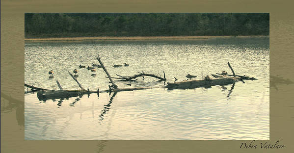 Ducks On The Lake Art Print featuring the photograph Ducky Of A Spring by Debra   Vatalaro