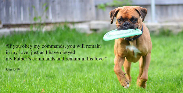 Commands Art Print featuring the photograph If You Obey My Commands... by J L