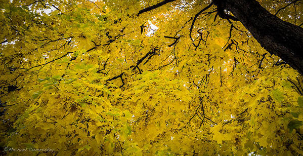 Tree Art Print featuring the photograph Yellow Tree by Michael Cummiskey