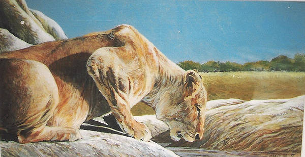 Wildlife Art Print featuring the painting Lion Low by Steve Greco