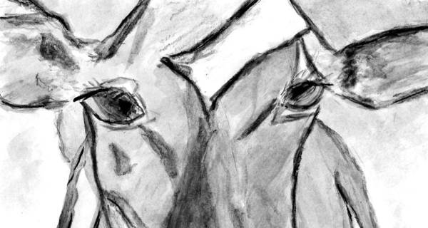 Cow Art Print featuring the drawing In The Window by Elizabeth Briggs