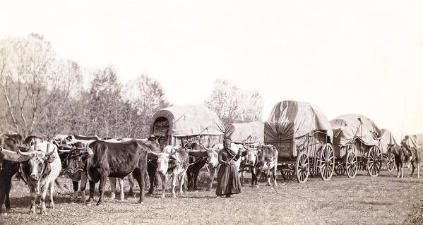 south Dakota Print featuring the photograph Ox-driven Wagon Freight Train C. 1887 by Daniel Hagerman