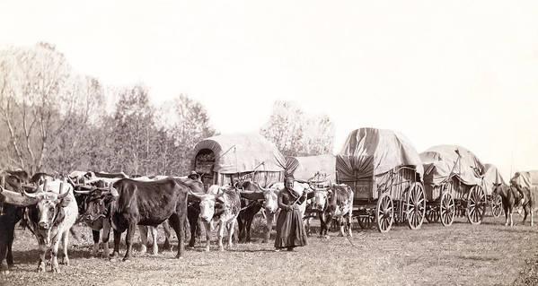south Dakota Art Print featuring the photograph Ox-driven Wagon Freight Train C. 1887 by Daniel Hagerman