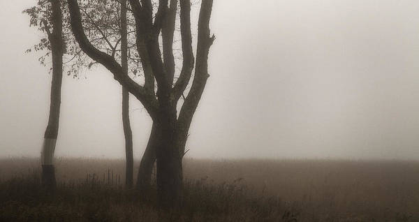 New England Art Print featuring the photograph Sepia Trees In Fog by Scott Snyder
