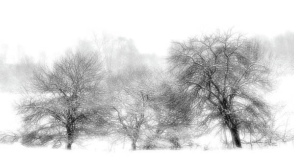 Winter Scene Fog And Trees Art Print featuring the photograph White Out by Vickie Szumigala