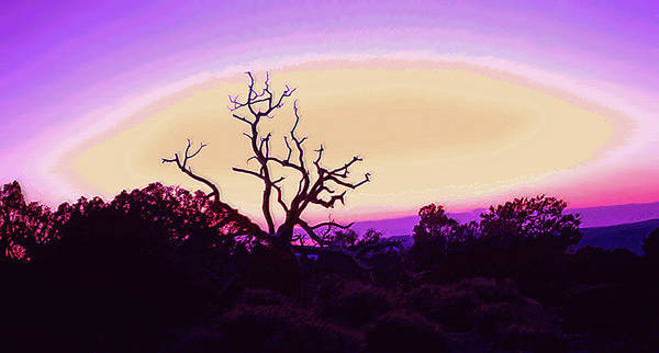 Desert Art Print featuring the photograph Desert Sunset With Silhouetted Tree 2 by Steve Ohlsen