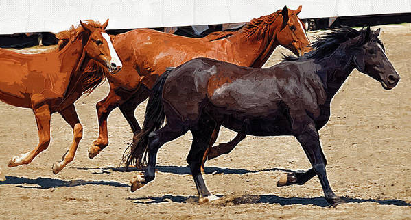 Horse Art Print featuring the photograph Three Horses Galloping by Clarence Alford