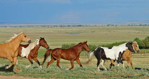 Herd Art Print featuring the photograph Wild Horses Wyoming by Heather Coen