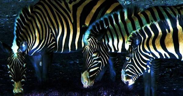Zebra Art Print featuring the digital art Zebras Glow by Kenna Westerman