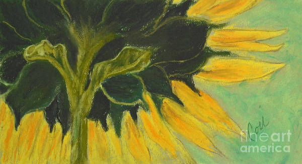 Sunflower Art Print featuring the drawing Sunny Side Up by Cori Solomon