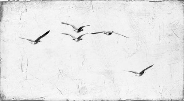 Geese Art Print featuring the photograph The Leader by Rebecca Cozart