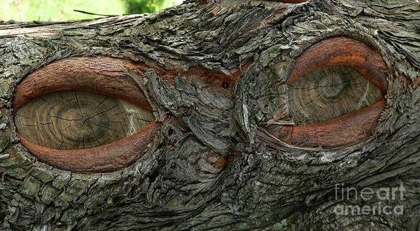 Eye Art Print featuring the photograph The Trees Have Eyes by Angela Wright