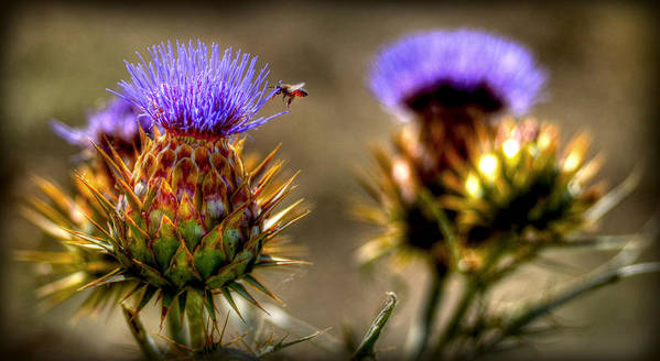 Plant Life Art Print featuring the photograph Busy Bee by Craig Incardone