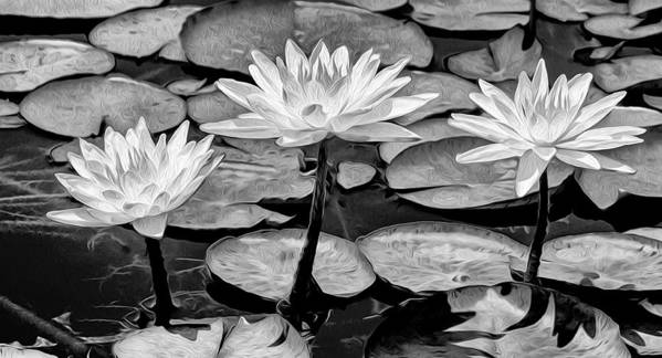 Flowers Art Print featuring the photograph Lilly Beuaties by Louise Haws