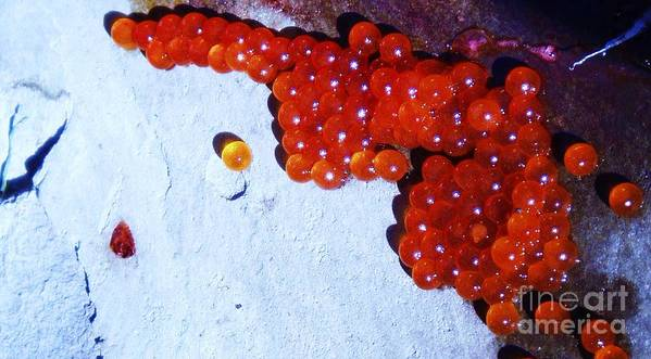 Photograph Fish Egg Lake Water Rock Art Print featuring the photograph Don't Kill Me. by Seon-Jeong Kim
