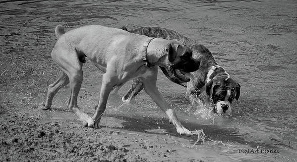 Boxer Art Print featuring the digital art Beach Buddies by DigiArt Diaries by Vicky B Fuller