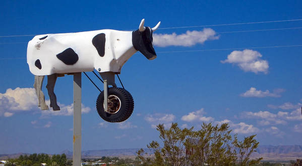 Cow Art Print featuring the photograph Cow Power by Skip Hunt