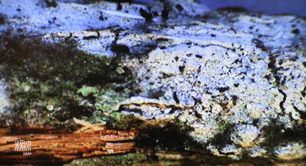 Microscopic Art Print featuring the photograph Moss On Wood by Michele Caporaso
