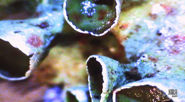 Microscopic Art Print featuring the photograph River Plant by Michele Caporaso