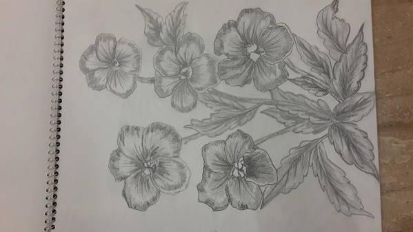 Sketching On Cartridge Sheet Art Print featuring the drawing Bloossams by Palli Ritu