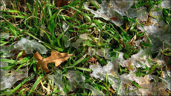 Grass Art Print featuring the photograph Brownleafsnowgrasscomp 2009 by Glenn Bautista