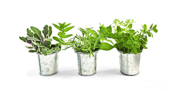 Herb Art Print featuring the photograph Fresh Herbs In Pots by Elena Elisseeva