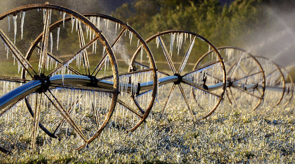 Farming Art Print featuring the photograph Frozen Wheels by David Lee Thompson
