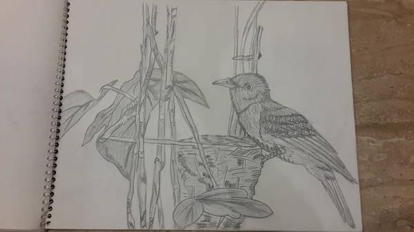Sketching On Cartridge Sheet Art Print featuring the drawing Mynest by Palli Ritu