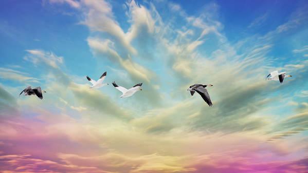 Bird Art Print featuring the photograph Snow Geese Over New Melle by Bill Tiepelman