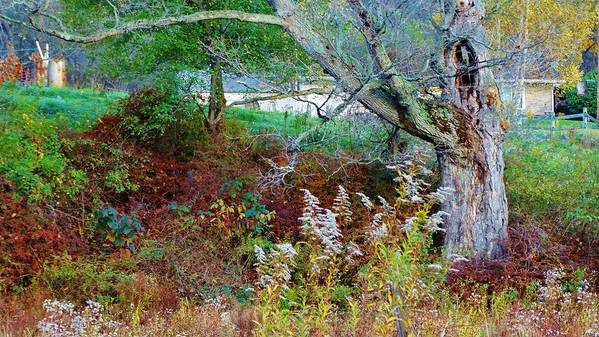 Old Dead Tree With Hole In It Art Print featuring the tapestry - textile Tapestry Of Colors by Sherry Brant