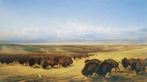 William Jacob Hays Art Print featuring the painting The Gathering Of The Herd by William Jacob Hays