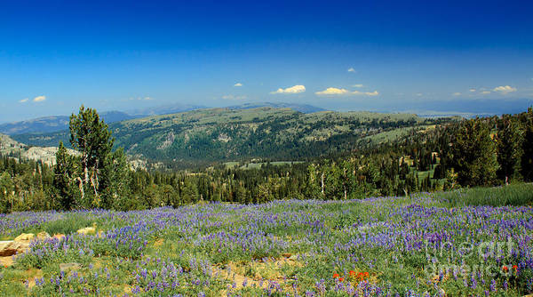 Southwest Idaho Print featuring the photograph Vast View And Lupine by Robert Bales