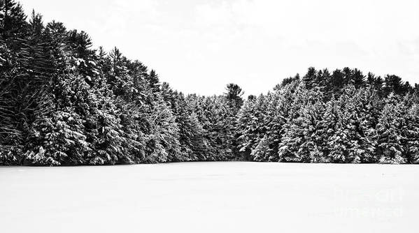 Vermont Art Print featuring the photograph Winter Trees Mink Brook Hanover Nh by Edward Fielding