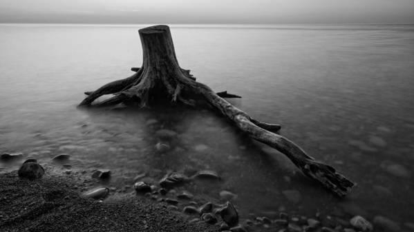 Darren Creighton Art Print featuring the photograph Bluffs Beach Stump Black And White by Darren Creighton