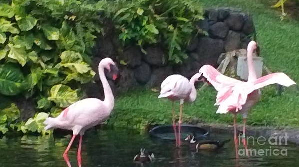 Birds Art Print featuring the photograph Flamingo Party by Silvie Kendall