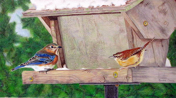 Bird Art Print featuring the drawing New Girl In Town by Sandra Chase