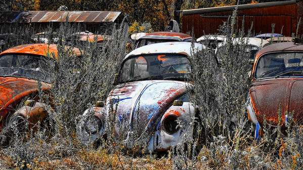 Bugs Art Print featuring the photograph Not Herbie The Love Bug by Douglas Barnard