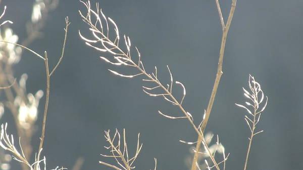 Landscape Art Print featuring the photograph Summer Grass by Jennifer Kelley