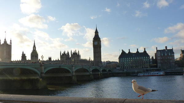 Big Art Print featuring the photograph The Big Ben And Dove by Andreia Gomes