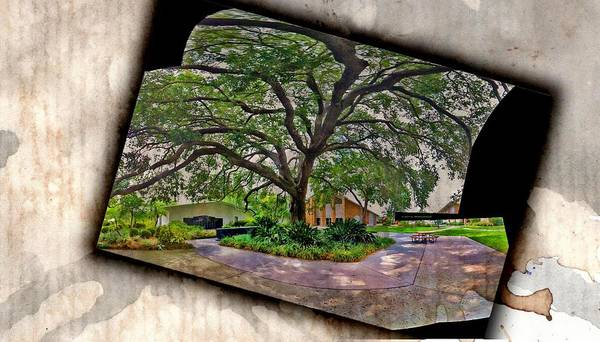 Tree Art Print featuring the photograph Tree In Church Yard - 2 by Larry Mulvehill