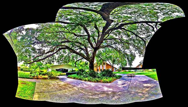 Tree Art Print featuring the photograph Tree In Church Yard - 4 by Larry Mulvehill