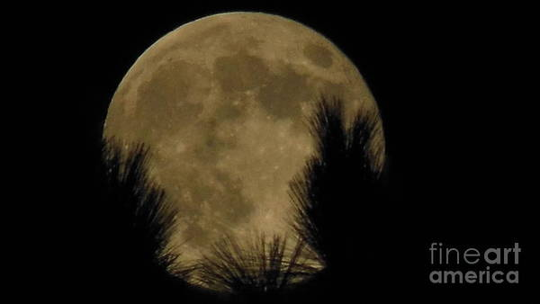 Super Moon Art Print featuring the photograph Super Moon by Eclectic Captures