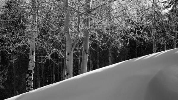 Colorado Art Print featuring the photograph Aspencade by Skip Hunt