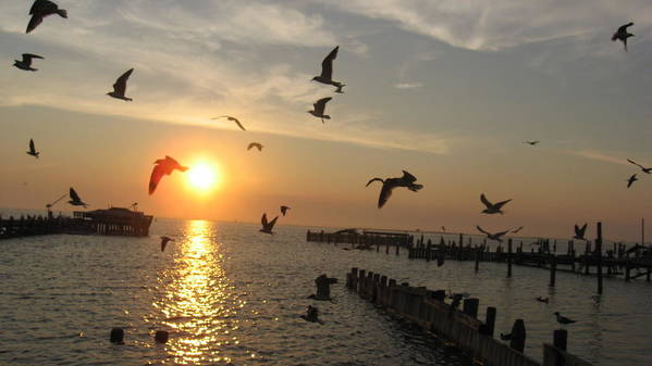 Seagulls Art Print featuring the photograph Barneget Sunset by Colleen DalCanton