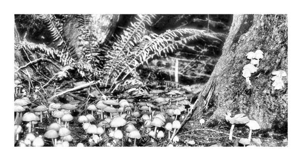 Black Art Print featuring the photograph Caterpillars Playground 2 by J D Banks